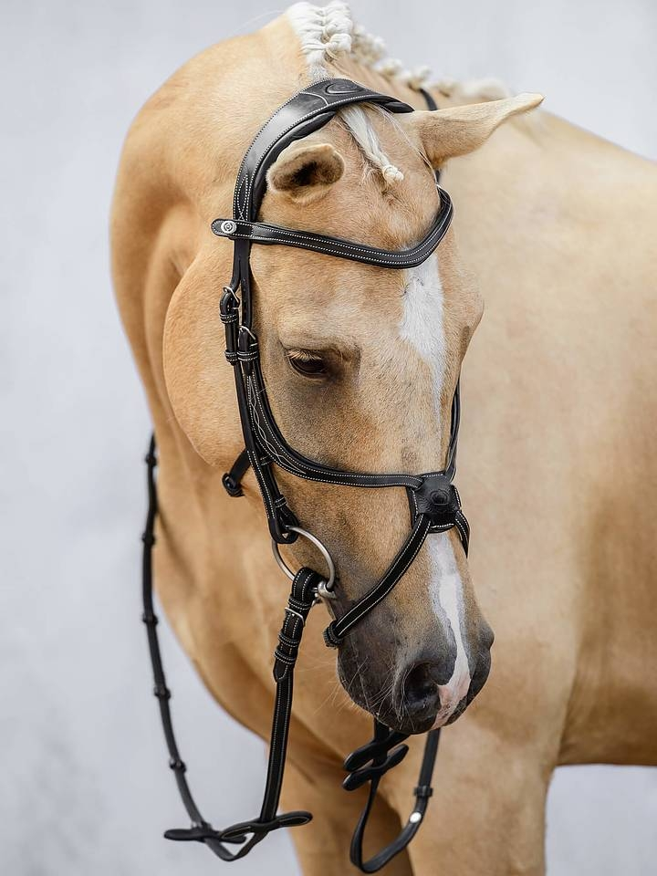 Limited Bridle