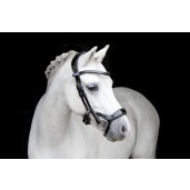 PS of Sweden Bridle, Pioneer