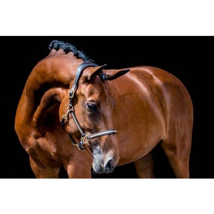 PS of Sweden Halter Fancy Stud